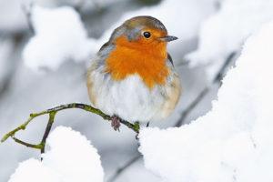 Vinterlukket For Nye Tilslutninger